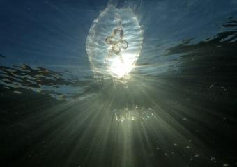 meduusa (1)